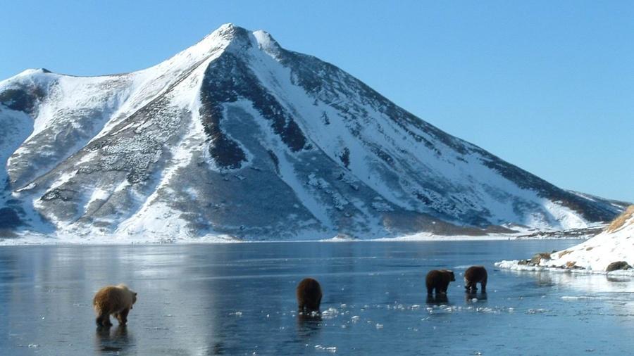Rustoken для туристов: Камчатка готовится токенизировать китов и вулканы