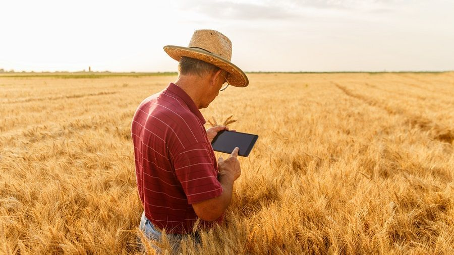 Cerealia запускает платформу на блокчейне для торговли сельскохозяйственной продукцией