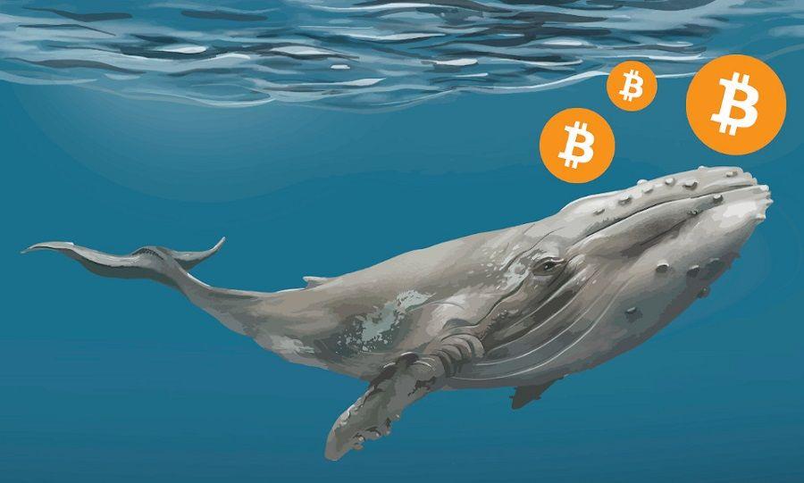 Перетягивание на падении: «киты» продают биткоин, инвесторы держат