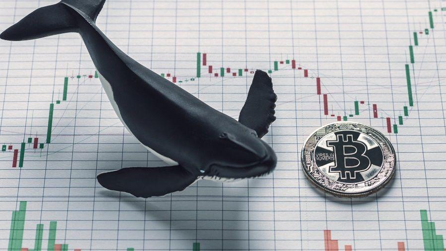 «Киты» владеют почти половиной всех выпущенных биткоинов