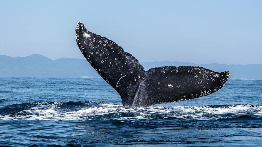 Glassnode: количество «китов» BTC достигло нового рекорда во время коррекции рынков