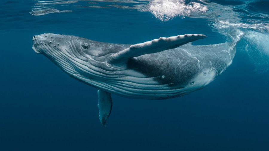 Santiment: «киты» переместили 700 000 ETH на криптовалютные биржи за последние три дня