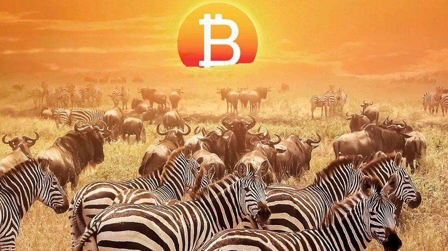 Регуляторы ЮАР раскрыли криптовалютную пирамиду Mirror Trading International