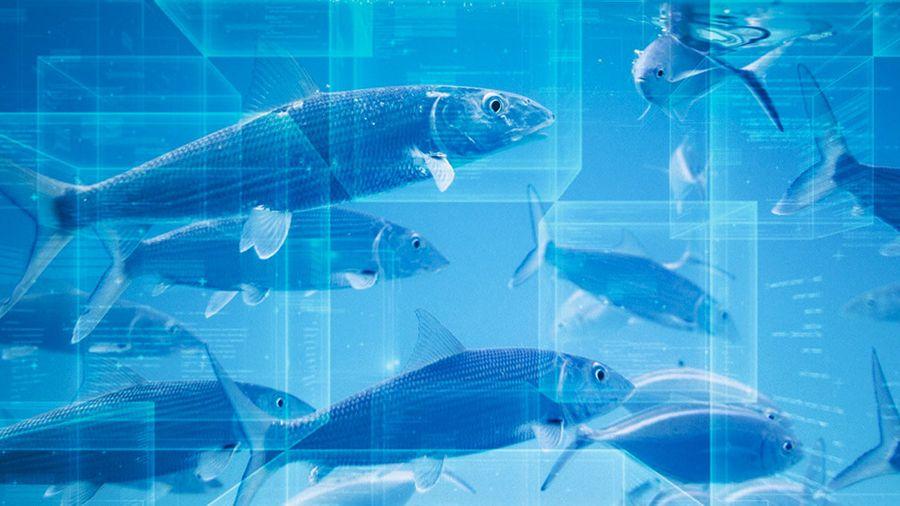 UnionBank и WWF разработают систему на блокчейне Streamr для отслеживания морепродуктов
