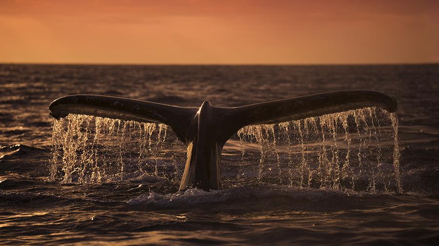 whale_alert_5_500_btc_perevedeny_iz_neizvestnogo_koshelka_na_birzhu_binance.png